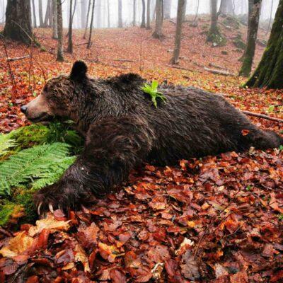 Bär und Wolfjagd in Serbien