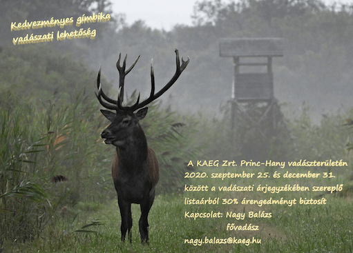 KAEG Zrt. staatliche Forstwirtschaft - Ungarn